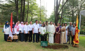 """Na"" sapling planted at the prestigious Bogor Botanic Gardens, Indonesia"