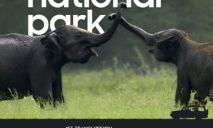 Go on a Couch Safari and Witness the Amazing Minneriya Park