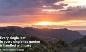Ceylon Tea – World's Favorite Tea, Facing Up to New Challenges