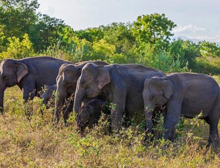 Gazette issued establishing 'Hambantota Managed Elephant Reserve'
